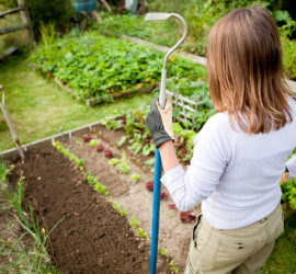 weeding and planting seeds